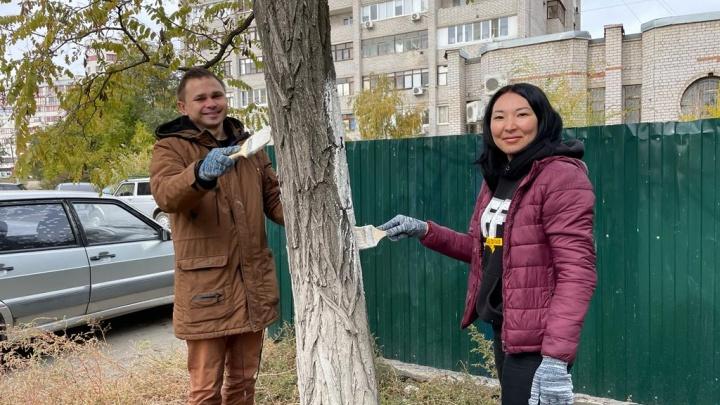 «Зеленый город»: в Волгограде волонтеры спасли деревья от ультрафиолета и короедов