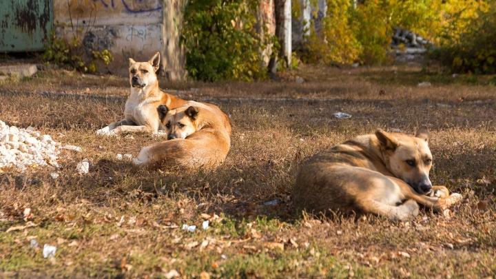 В Самарской области более 4 тысяч человек пострадали от нападений животных