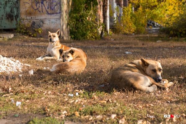 Большой проблемой по-прежнему остаются бездомные собаки