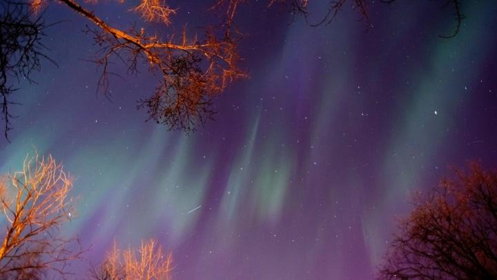 «Увидит даже неподготовленный»: как лучше наблюдать за ближайшим звездопадом в Архангельске