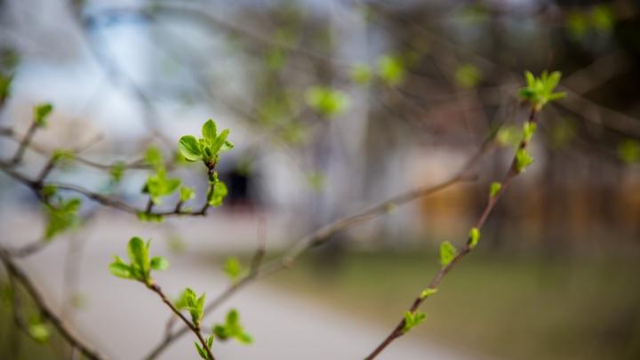 Жаркий апрель или снег в мае? Разбираемся, какой будет весна в Новосибирске (прогноз на март, увы, не радует)