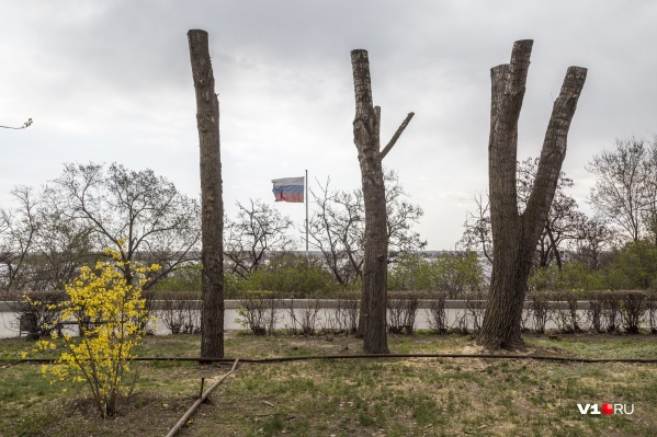 Так, по мнению Виталия Лихачева и городской администрации, выглядит идеально преобразившийся Волгоград
