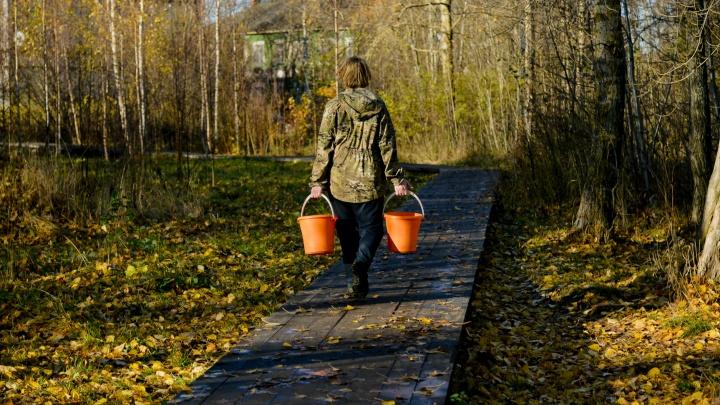 «Кусочек природы в городе». Архангелогородка объясняет, почему не нужно убирать листья в парках
