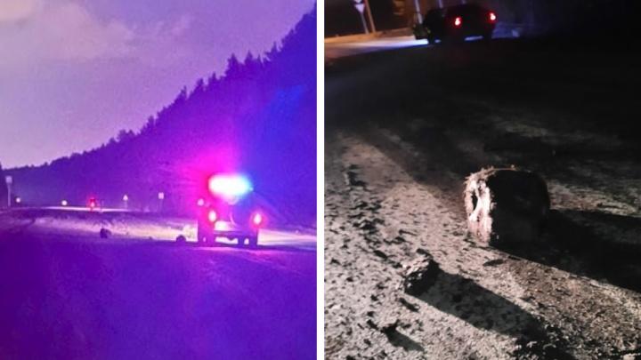 «Из кузова сыпались огромные булыжники»: на Урале из-за дырявого самосвала столкнулись несколько авто