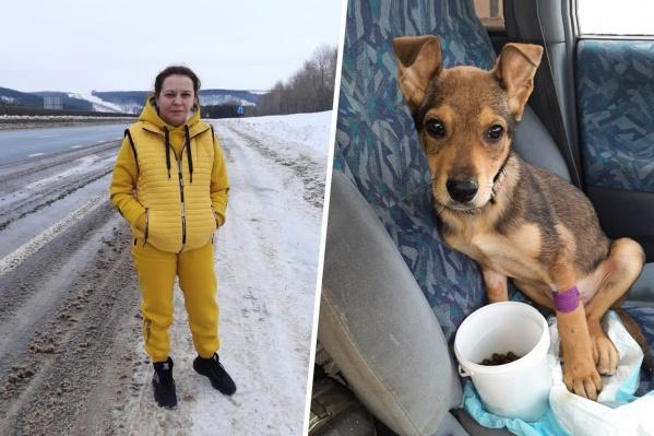 Бездомным собакам в Тюмени помогают волонтеры