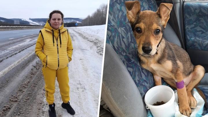 Семь собак в доме, 12 — в вольере, и она хочет еще. Колонка тюменки о том, почему помогать животным не стыдно