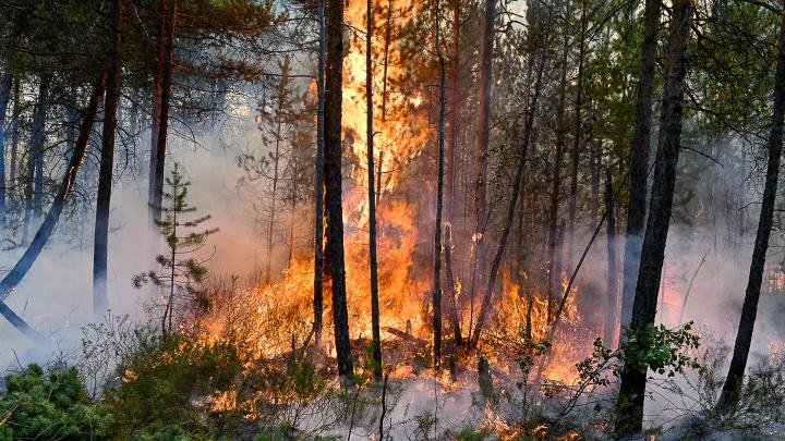 В Свердловской области за сутки возникло больше десяти новых пожаров. Региону нужны волонтеры