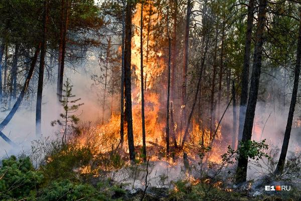В регионе ликвидировали семь пожаров, но возникло 12 новых