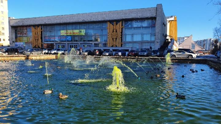 «Вспышка роста водорослей»: архангелогородка предположила, почему зазеленел фонтан с утками