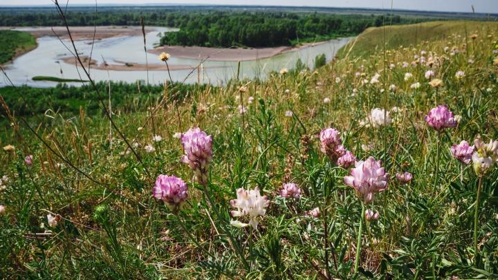Власти Кузбасса планируют создать больше 10 новых особо охраняемых территорий
