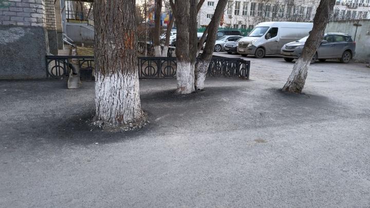 Деревья закатали в асфальт при строительстве парковки в центре Тюмени