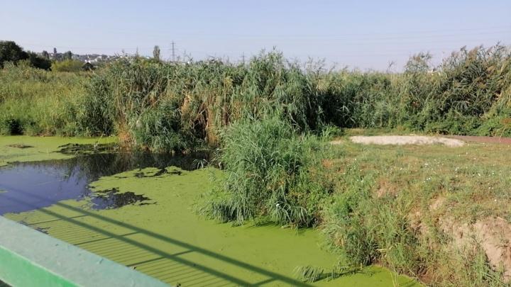 «Запах такой, что на глаза слезы наворачиваются»: под Волгоградом реку Мечетку топят канализационные стоки