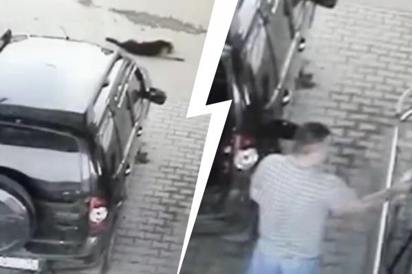 Люди, которые были на заправке, говорят, что мужчина видел лежавшего пса