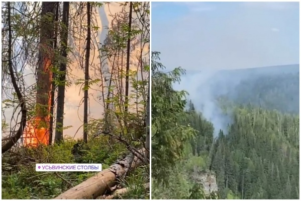 Горящий лес: вид вблизи и издалека