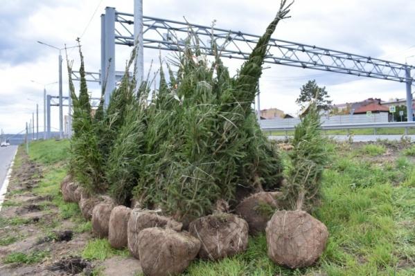 Любые работы по благоустройству в этом году будут сопровождаться высадкой деревьев