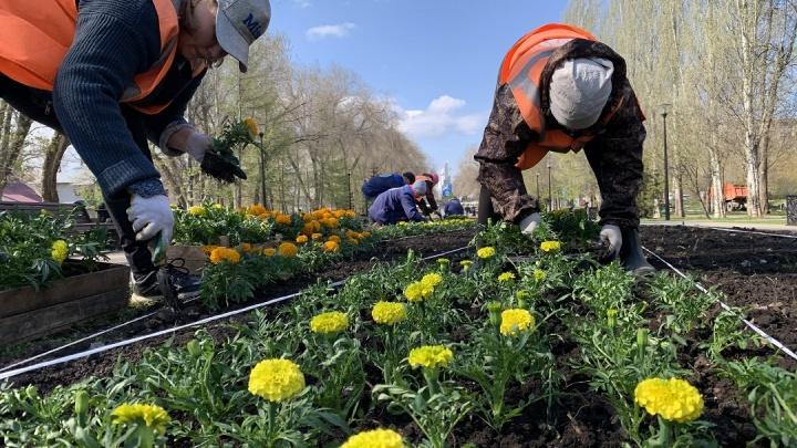 Герани, петунии и канны: самарские парки и площади начали украшать цветами