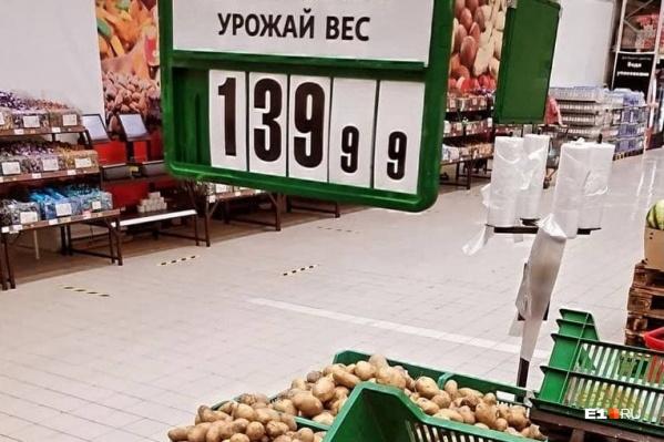 В этом году из-за аномальной жары и засухи агрономы опасаются за урожай овощей на Урале