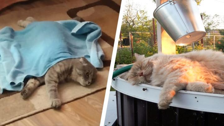 Под мокрым полотенчиком: 15 котов, которые нашли, как спастись от жары