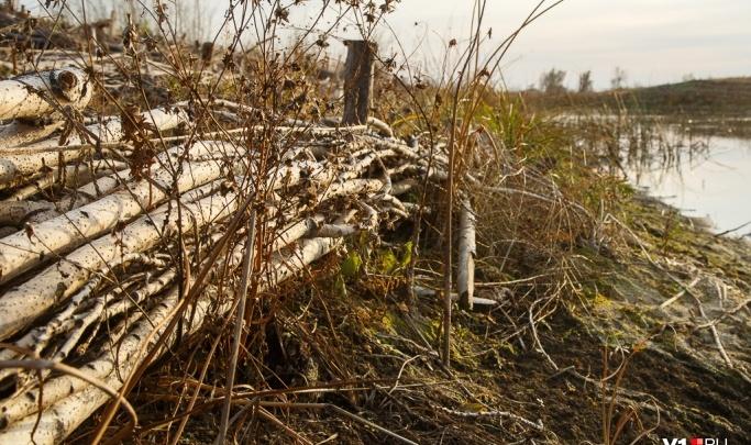 Вышел за дровами и исчез: в Волгоградской области ищут без вести пропавшего школьника