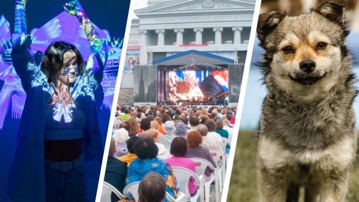 Идем на экофест, учимся быть хорошим хозяином для собаки и обновляем Instagram: 15 идей на выходные