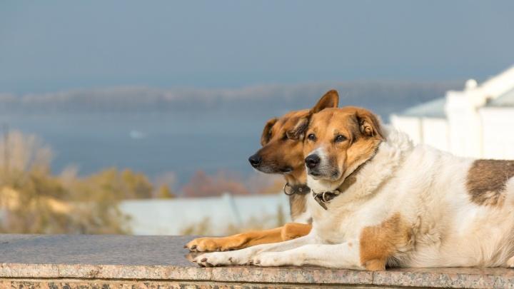 «Я буду очень «за» платить налоги»: кинолог — об осознанном отношении к домашним животным