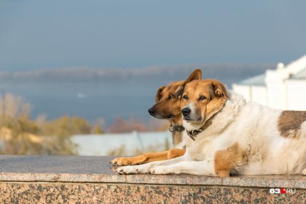 Домашние животные, особенно крупные, требуют особого внимания и ответственности