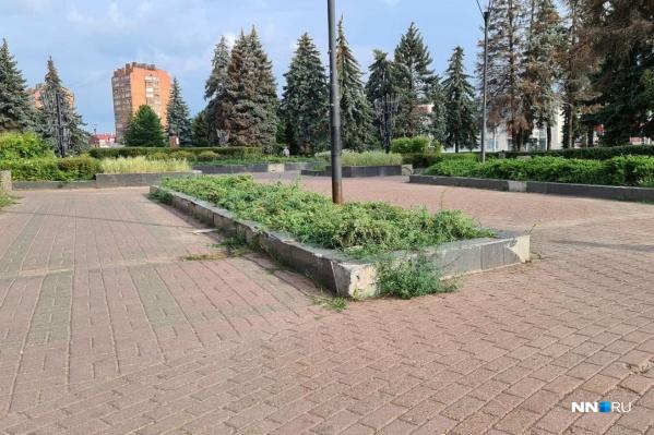 Состояние облицовки клумб на площади Киселёва вызывает вопросы у некоторых жителей