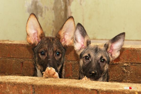 По мнению мэрии, некоторые собаки были изначально истощены