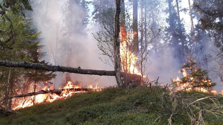 11 спасателей с ночи тушат лесной пожар в Верхнетоемском районе