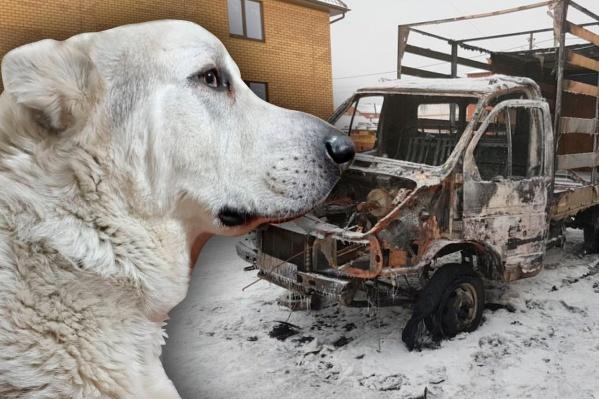 В новогоднюю ночь неизвестный сжег машину семьи, а теперь у них отравили собаку