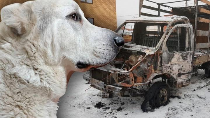 Челябинец, которому Дед Мороз спалил «Газель», лишился любимой собаки. Пса отравили