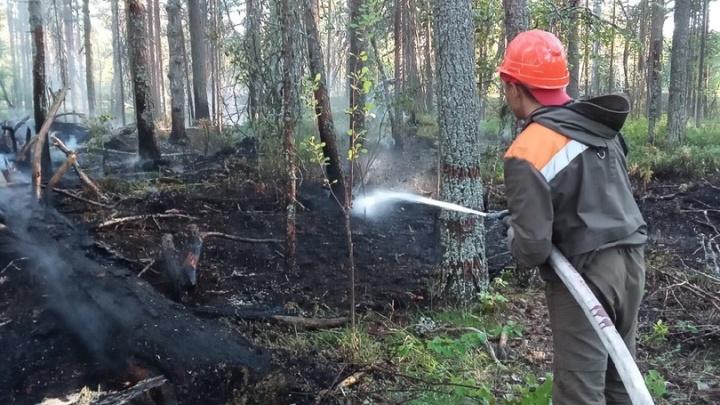 «Огонь может возникнуть из-за любого стеклышка»: в Поморье введут высший класс пожароопасности