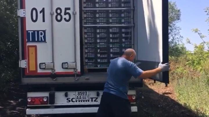В Самарской области задержали около 2 тонн абрикосов с паразитами