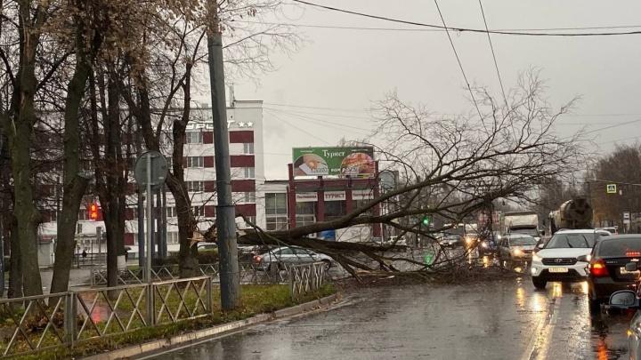 «Снесло троллейбусные провода»: в Ярославле начался ураган с ливнем. Онлайн-трансляция
