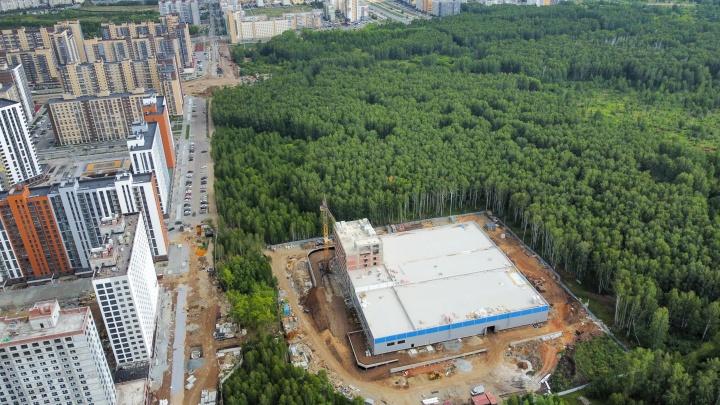 Челябинцы, опасаясь вырубки леса, выступили против новых ЖК и катка рядом с хоккейным центром