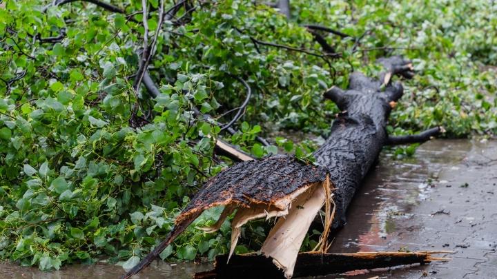 МЧС предупреждает о сильном ветре и грозах в Пермском крае