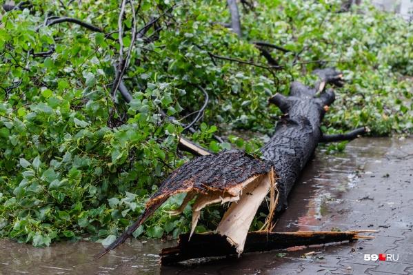 В такую погоду не стоит ходить возле деревьев — сильный ветер может сломать их и обрушить на людей