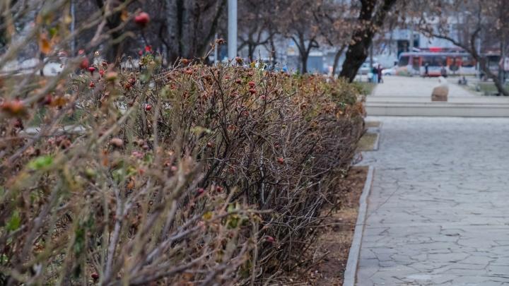 В выходные в Прикамье ожидаются заморозки