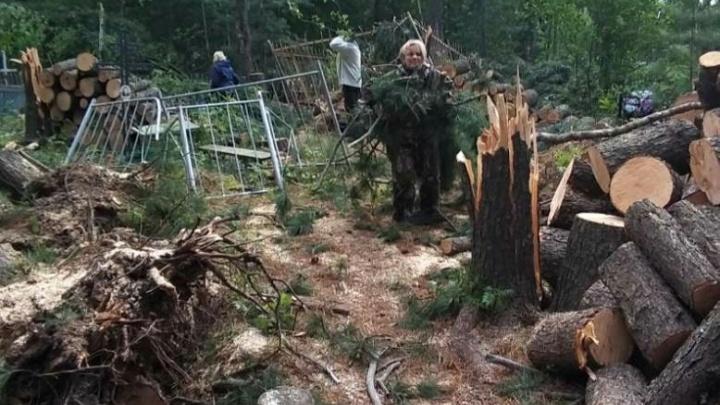 В Сургутском районе ураган повалил вековые кедры и разрушил кладбище