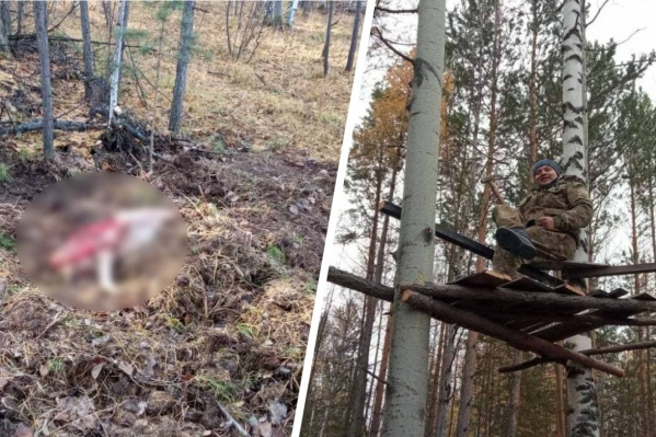 Сотрудник полиции в засаде застрелил медведя