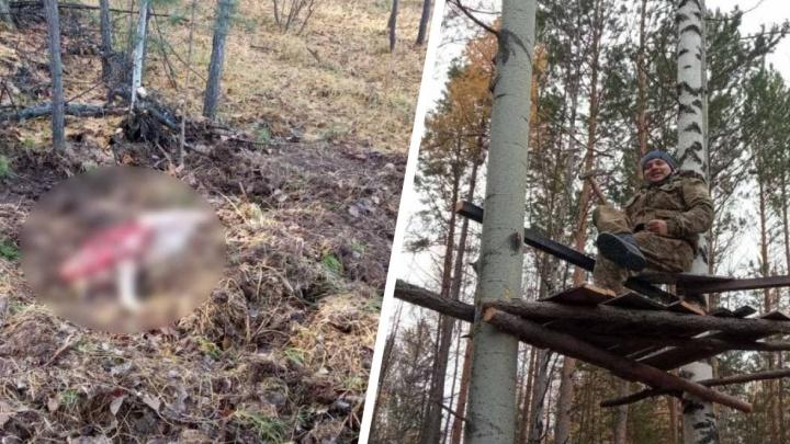 Полицейский в засаде застрелил медведя. Буйное животное караулили семеро охотников