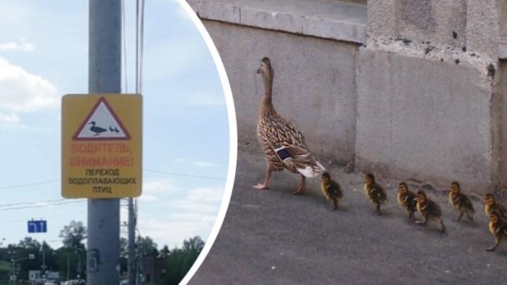 «Внимание! Утки!» В уральском городе установили необычные дорожные знаки, чтобы спасти птиц