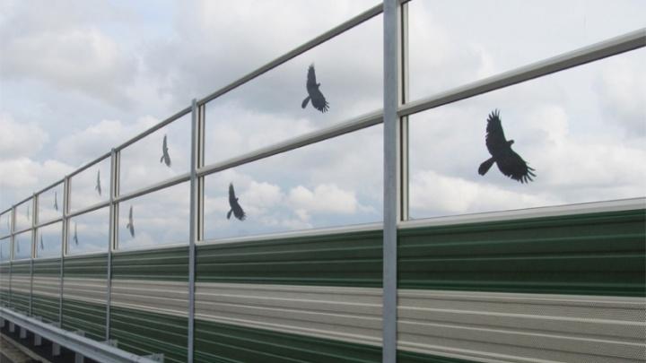 В Тюмени массово гибнут птицы, сталкиваясь с шумозащитными экранами. Эту проблему наконец решат