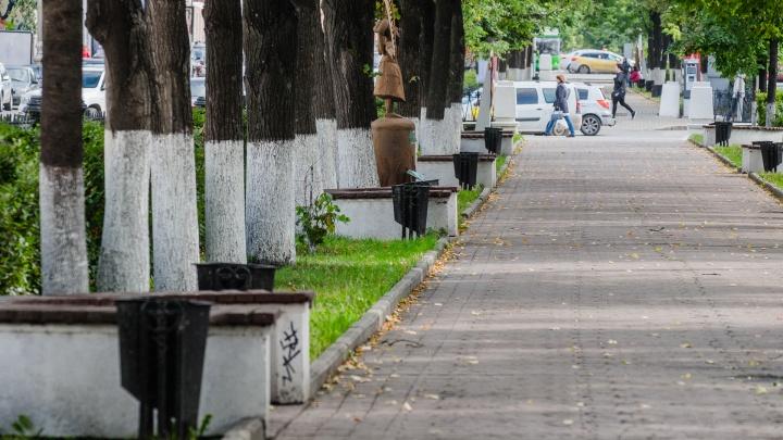 Более 40 деревьев на Компросе уберут и вместо них высадят молодые липы