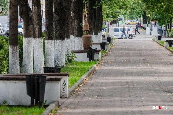 Деревья на проспекте обследовала комиссия