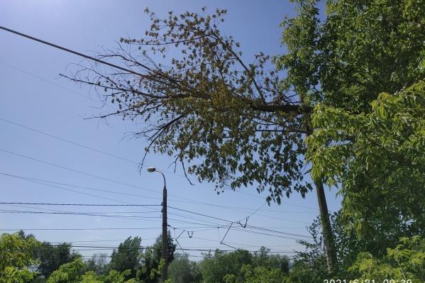 Из-за рухнувшего дерева в Волгограде остановилось движение трамваев