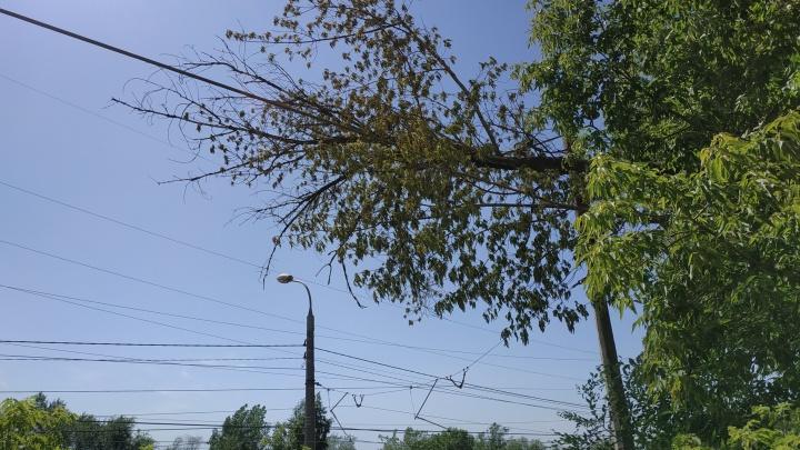 В Волгограде дерево остановило движение трамваев: ствол рухнул на провода контактной сети