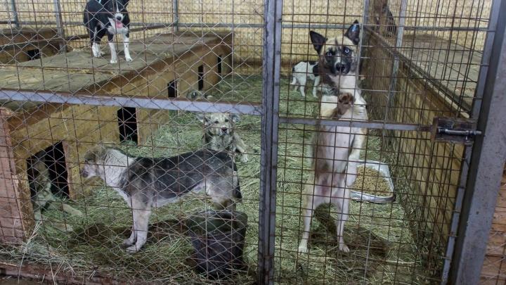 Бездомные собаки в Волгоградской области за сутки изгрызли пятерых детей