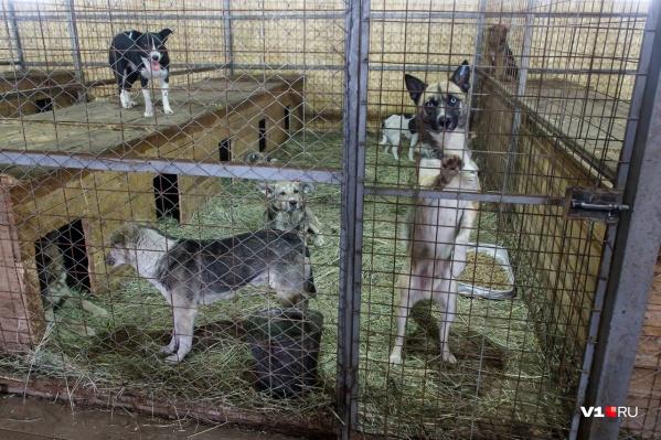 Жертвами бездомных собак стали сразу пятеро детей