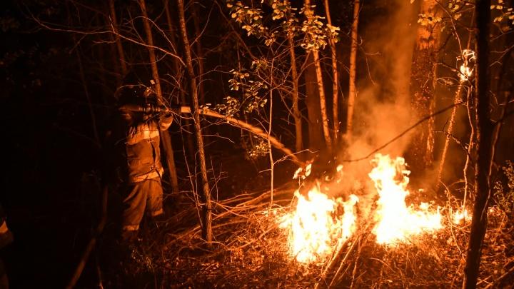 Километры выжженного леса и задымлений: 20 главных кадров природной катастрофы на Волчихе